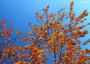feuilles-au-vent