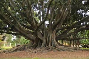 racines1